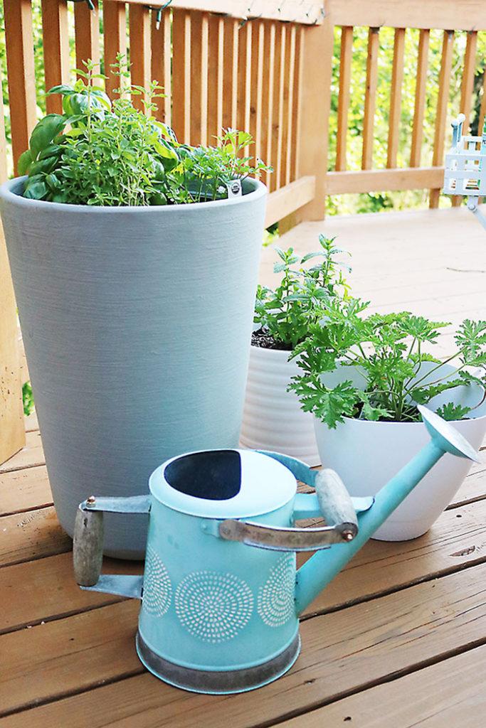 herb-plants-in-pot
