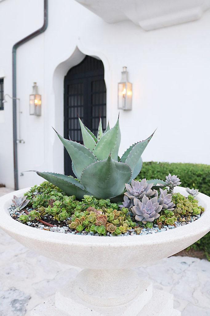 alys-beach-cactus