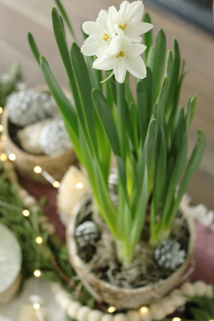 christmas-decorations-paperwhites