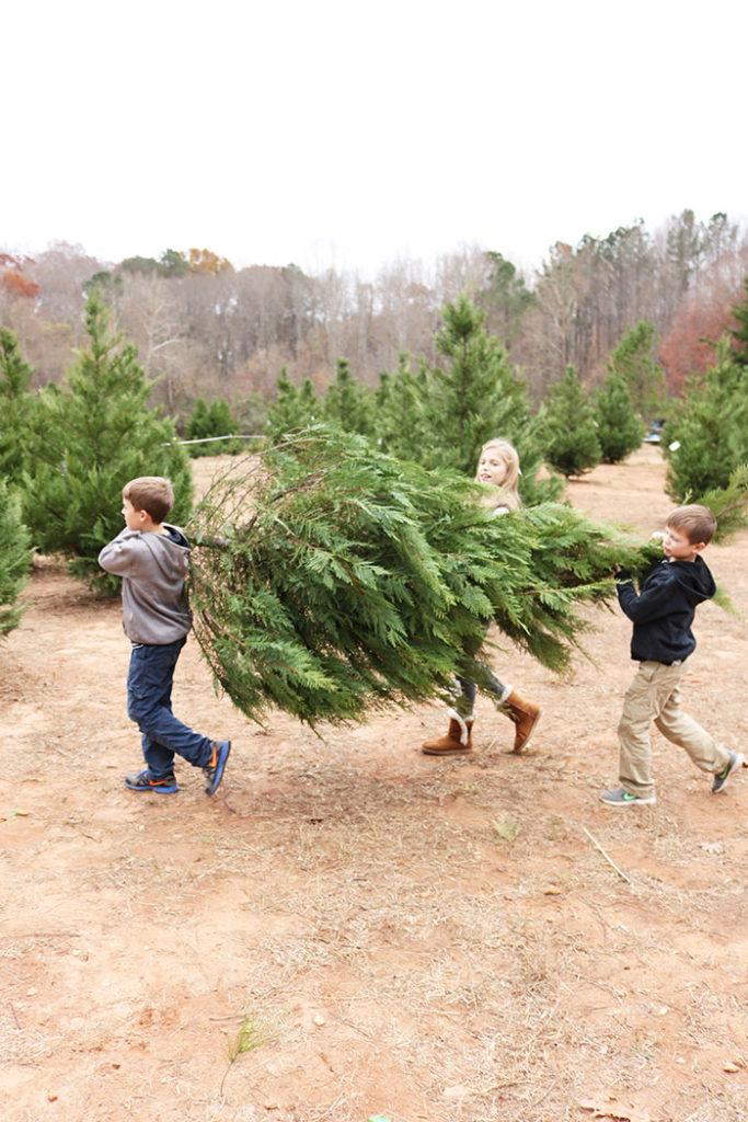cutting-christmas-tree-hauling-tree