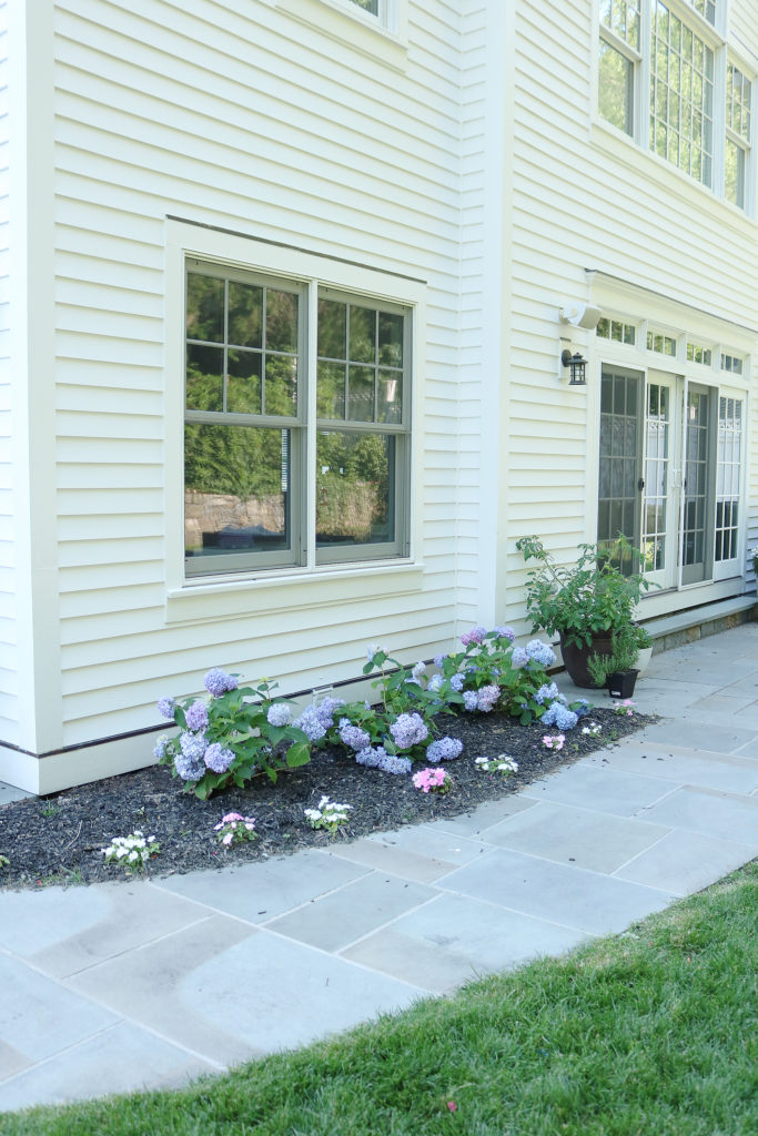 Hydrangea plants for landscaping yard against white house