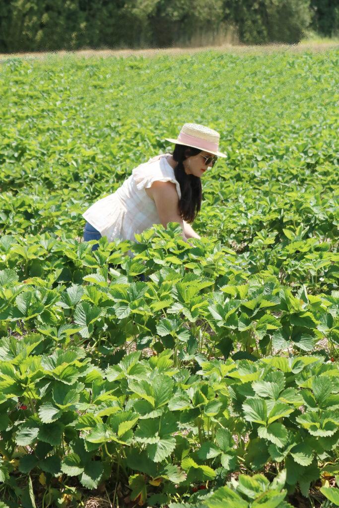 Strawberry Fields Forever, Annual Strawberry picking trip, summer fruit picking, Jones family Farm, New England life    Darleen Meier Top CT Lifestyle Blogger #darleenmeier #strawberryfields
