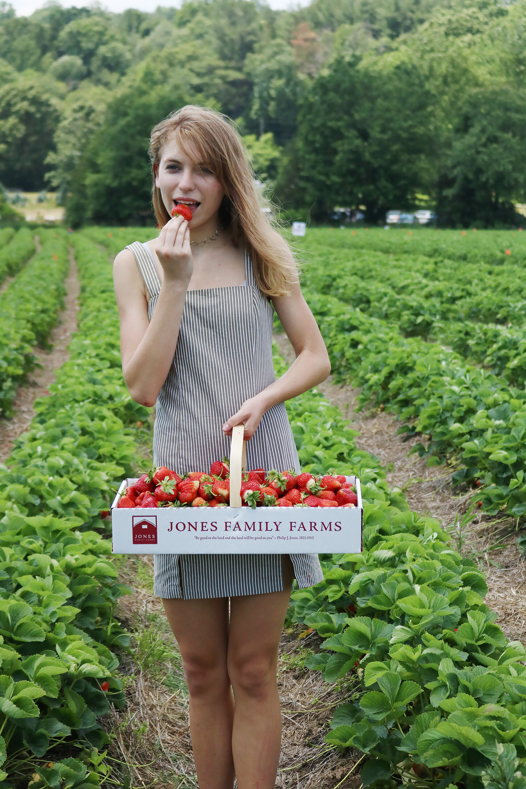 Strawberry picking, strawberry fields forever, jones family farms, connecticut strawberry picking, strawberry picking with children    Darling Darleen Top Lifestyle CT Blogger #strawberryfields