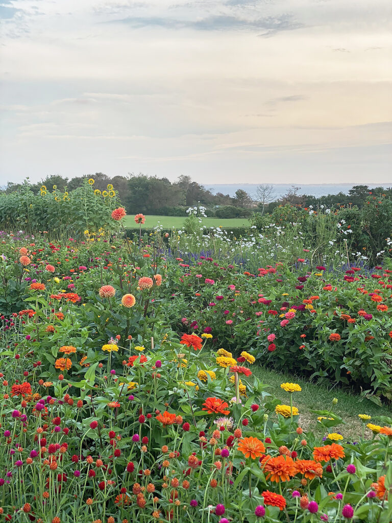 Best locations and instagrammable spots to visit Connecticut flower fields for both spring and summer season. || Darling Darleen Top CT Lifestyle Blogger #darlingdarleen #ctflowerfields
